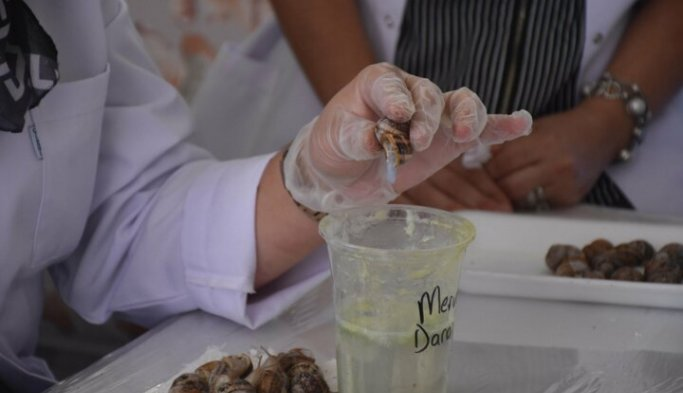 Salyangoz sıvısı çıkaran kadınlar üretime ortak oluyor