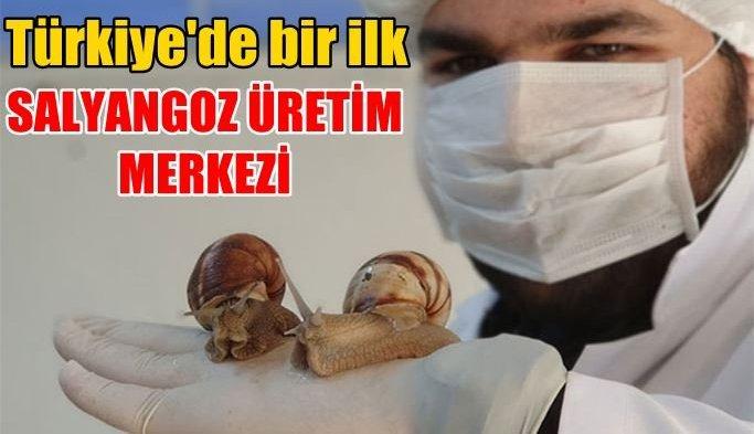Türkiye'nin Ilk Salyangoz Kuluçkahanesi İzmir'de